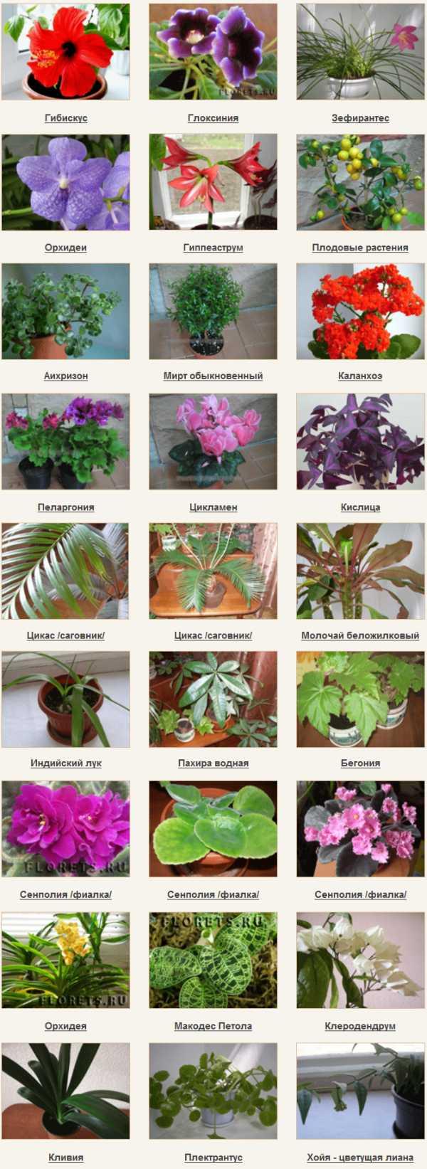 Цветы картинки комнатные и название фото