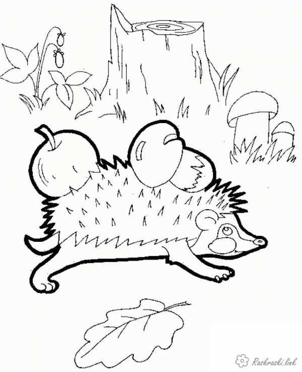 корзина с грибами раскраска раскраска грибы в корзинке