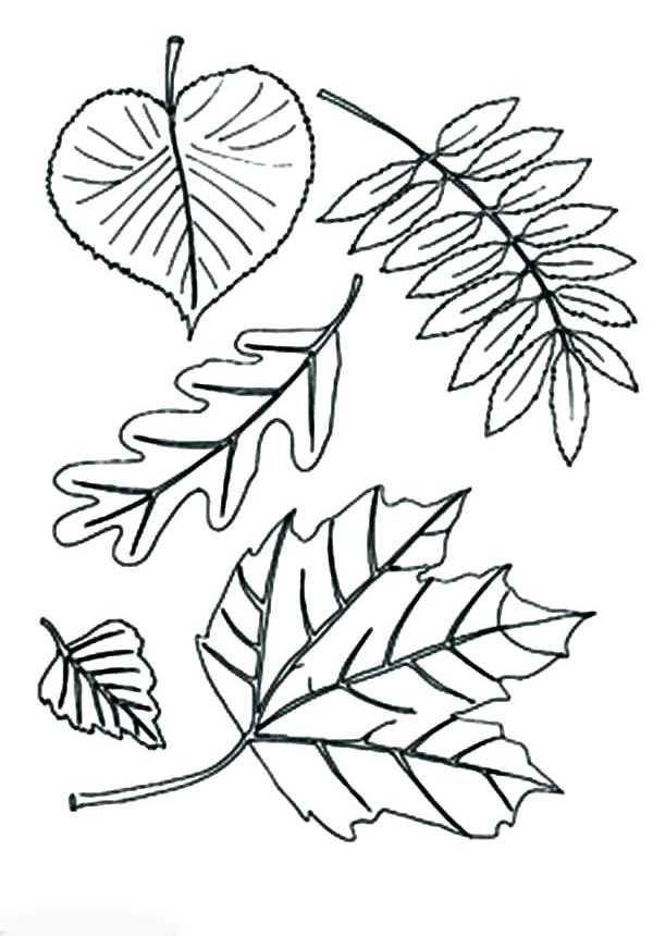 листья деревьев раскраска раскраска листья деревьев